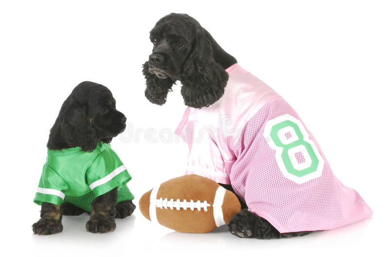 Download Sports hounds stock photo. Image of green, gree, cocker - 17910220