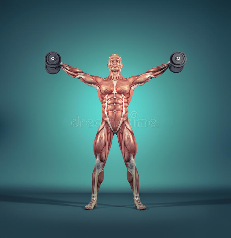 Sportsman raise small dumbbells. Weights. The muscular system. This is a 3d render illustration stock illustration