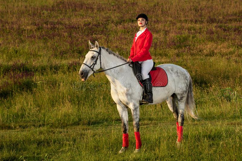 The horsewoman on a red horse. Horse riding. Horse racing. Rider on a horse. stock photo