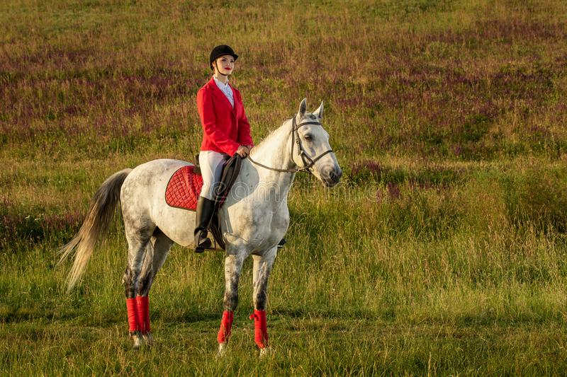 The horsewoman on a red horse. Horse riding. Horse racing. Rider on a horse. royalty free stock images