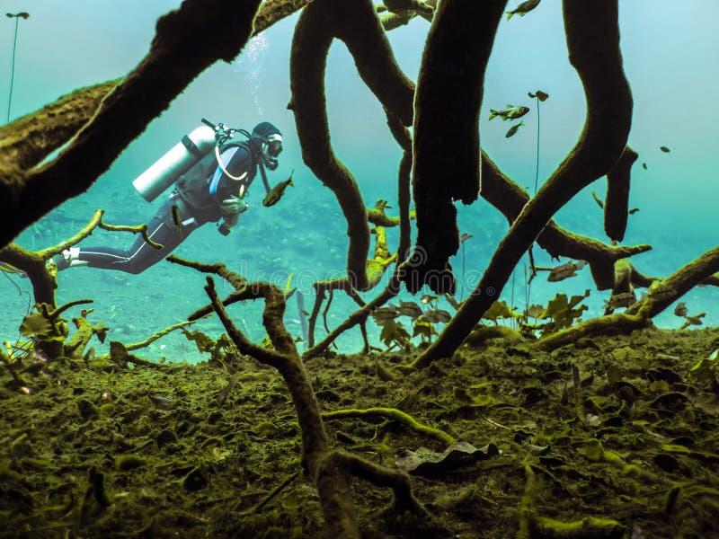 Sporttauchen in Cenote lizenzfreie stockfotografie