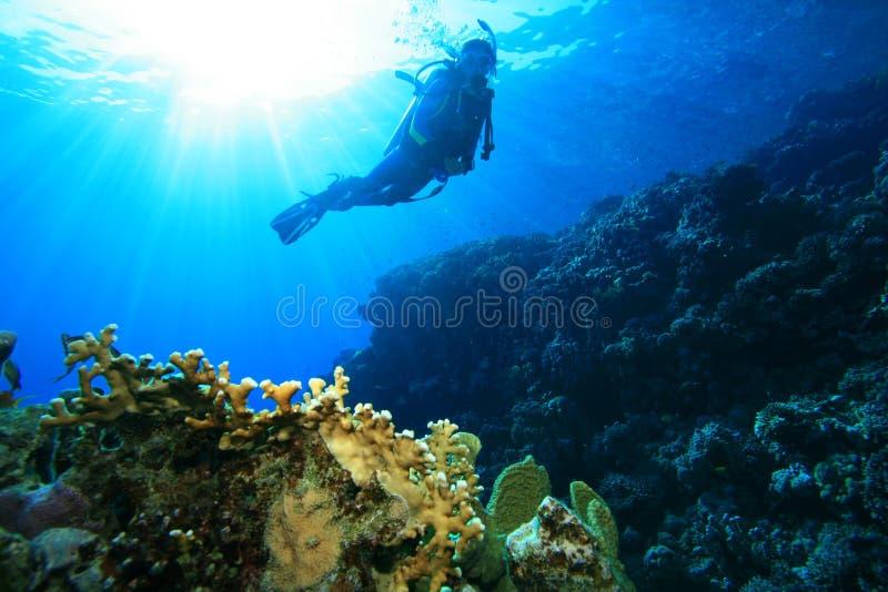 Sporttauchen in den tropischen Meeren lizenzfreie stockbilder