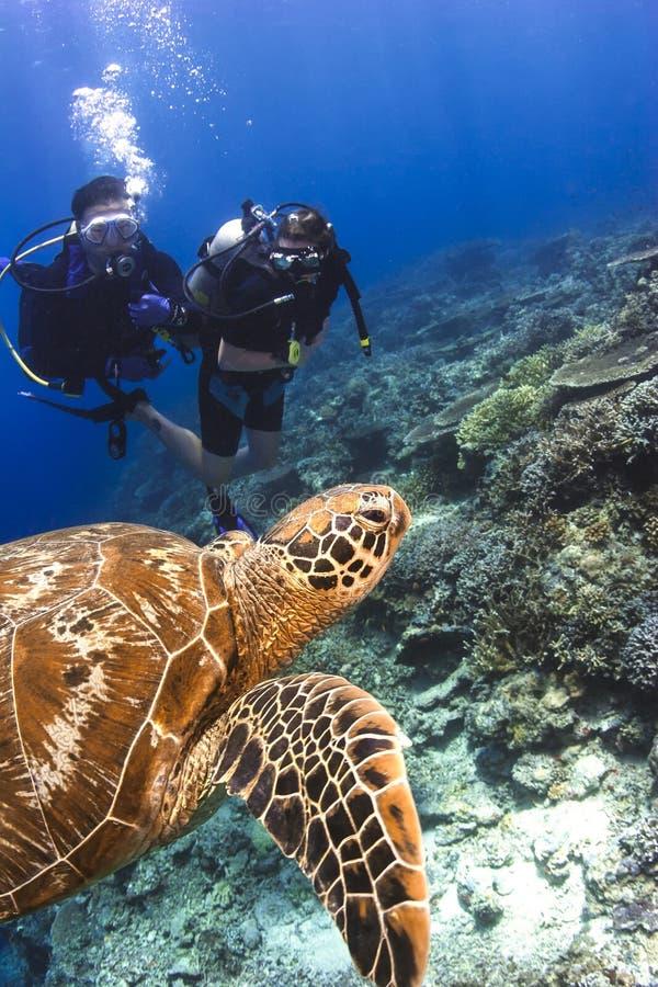 Sporttaucher, die mit Schildkröte schwimmen lizenzfreie stockfotografie