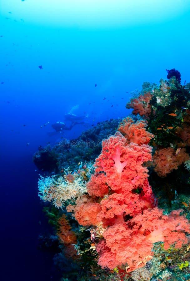Sporttaucher und bunte weiche Korallen stockfoto
