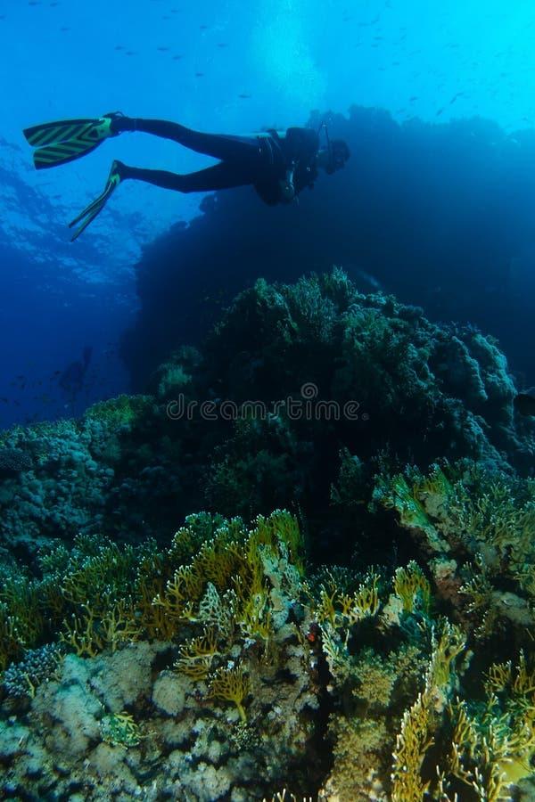 Sporttaucherschwimmen über den Feuerkorallen im Haifischriff lizenzfreie stockfotografie