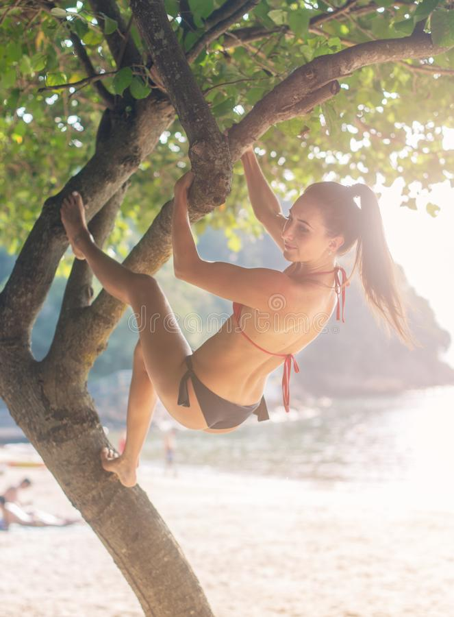 Sporty slim young woman wearing bikini climbing tree on a sandy beach at resort. Smiling caucasian brunette girl hanging stock photography