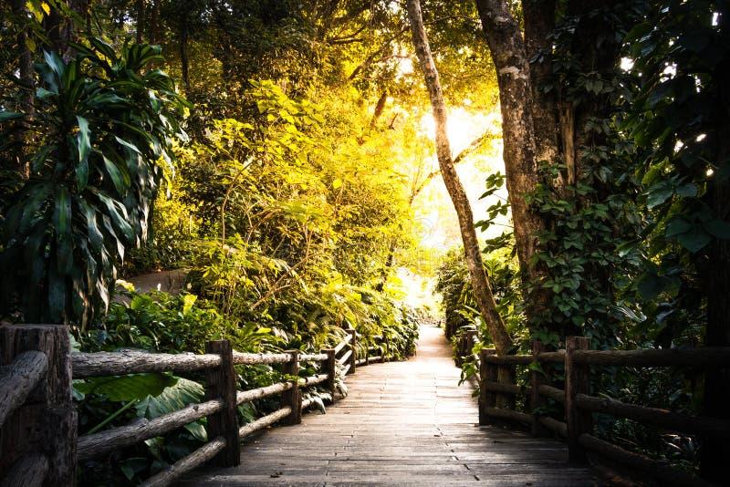 Sposób chodzić w ogródzie fotografia royalty free