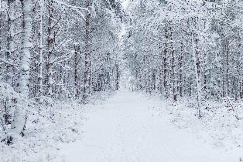 Sposób przez lasu wypełniał z śladami w śniegu fotografia royalty free