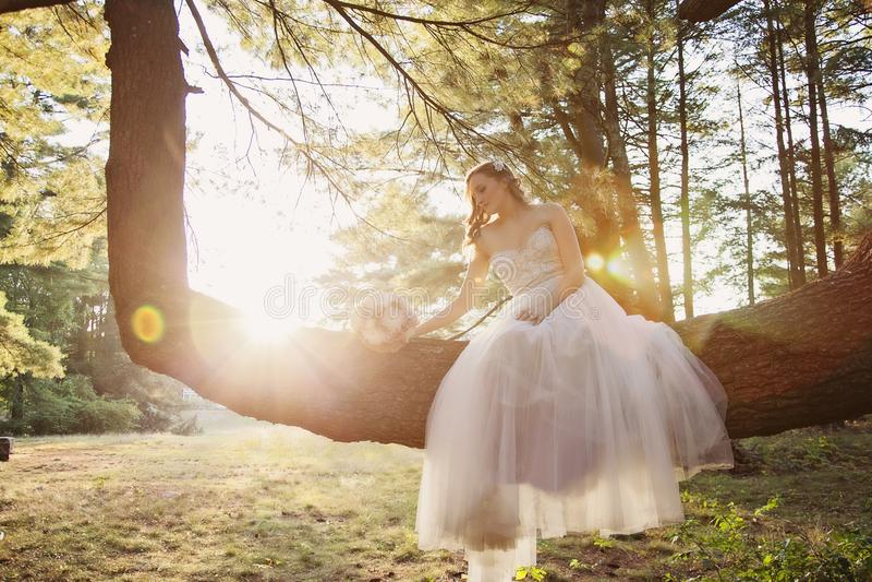Sposa che si siede in un albero fotografia stock