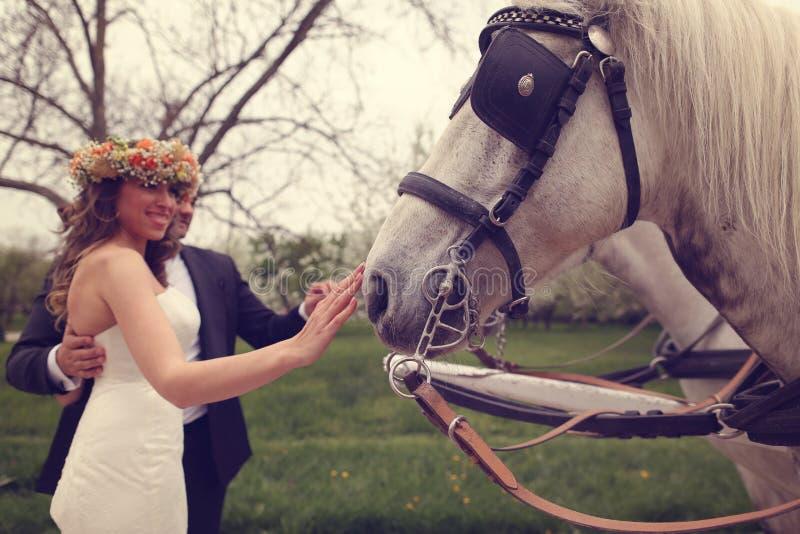 Sposa e sposo che giocano con il cavallo bianco fotografia stock libera da diritti
