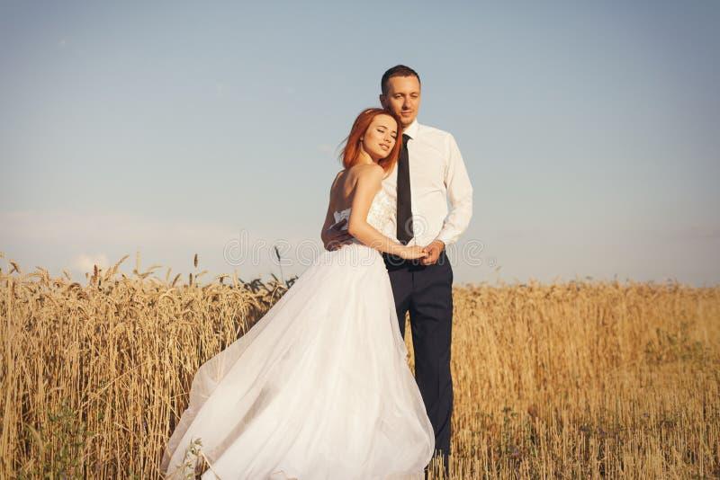 Sposa e sposo splendidi nel giacimento di grano Felicità e matrimonio fotografia stock libera da diritti