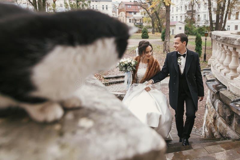 Sposata splendida ed elegante che cammina vicino a un bel gatto bianco e nero nella strada della città europea in autunno coppia  immagini stock libere da diritti