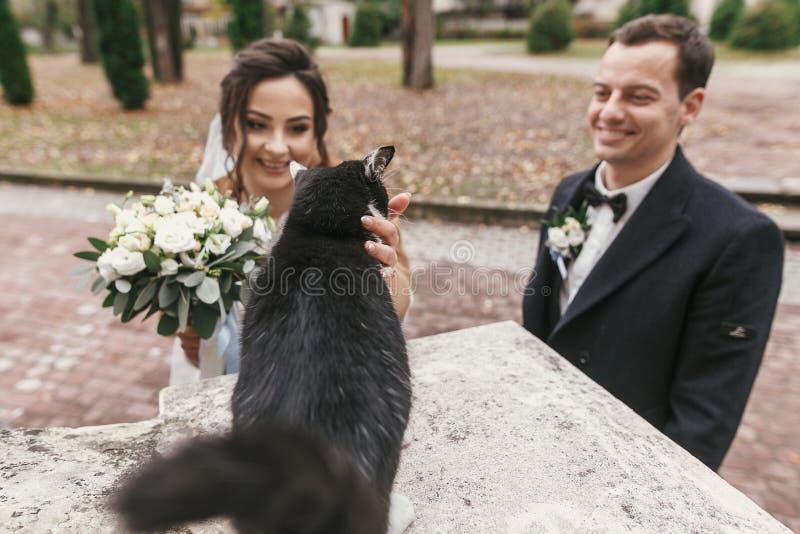Sposata stupenda ed elegante che gioca con un bel gatto bianco e nero nella strada della città europea in autunno coppia di nozze fotografia stock libera da diritti
