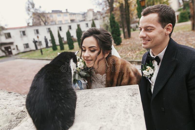 Sposata stupenda ed elegante che gioca con un bel gatto bianco e nero nella strada della città europea in autunno coppia di nozze immagine stock libera da diritti