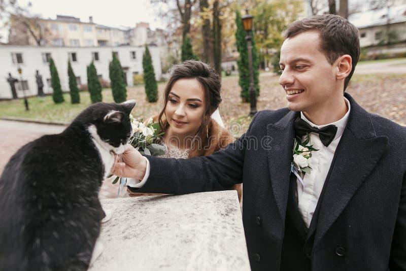 Sposata stupenda ed elegante che gioca con un bel gatto bianco e nero nella strada della città europea in autunno coppia di nozze immagini stock