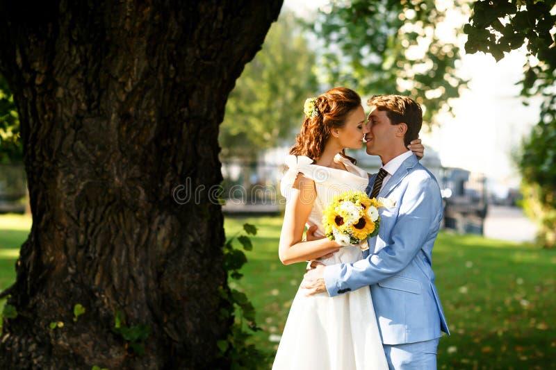 Sposo in vestito blu che bacia una sposa in un vestito bianco sotto l'albero immagini stock