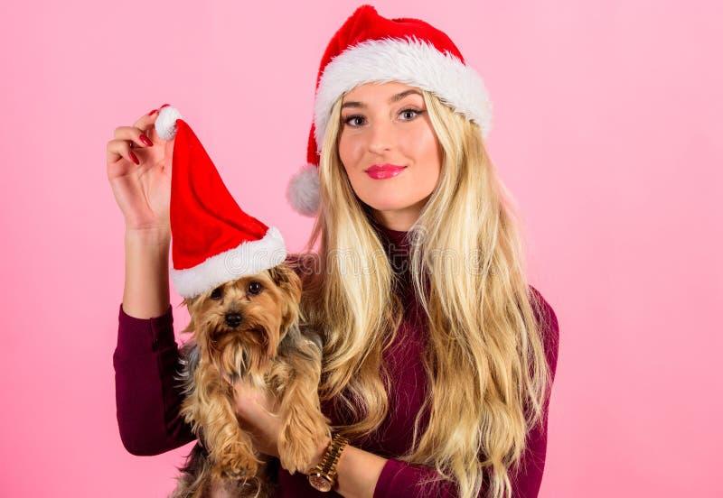 Sposoby mieć wesoło boże narodzenia z zwierzętami domowymi Kobiety i Yorkshire teriera odzieży Santa kapelusz Dziewczyny blondynk obrazy stock