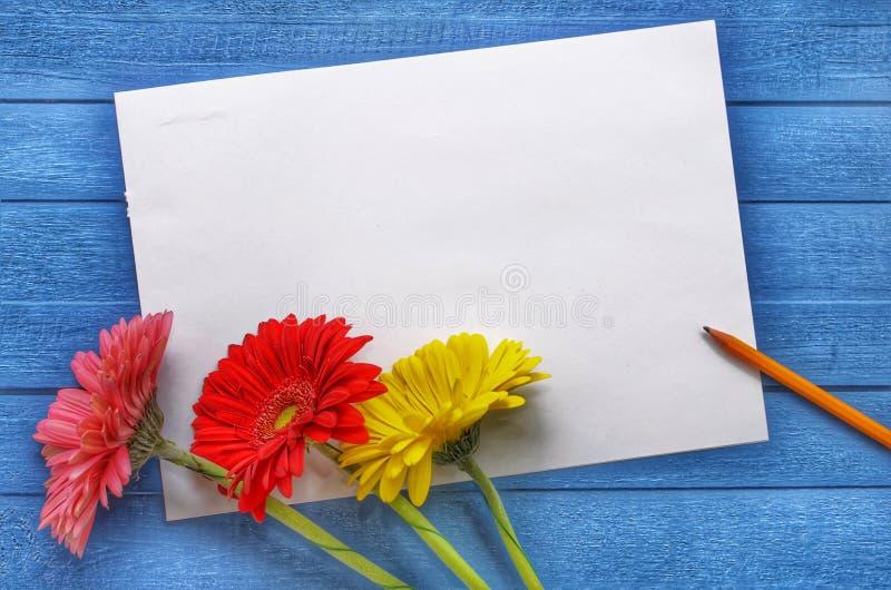 Spot op kunstwerk voor viering, tekening en tekst op een blauwe houten achtergrond met drie gekleurde bloemengerberas vlak royalty-vrije stock afbeelding