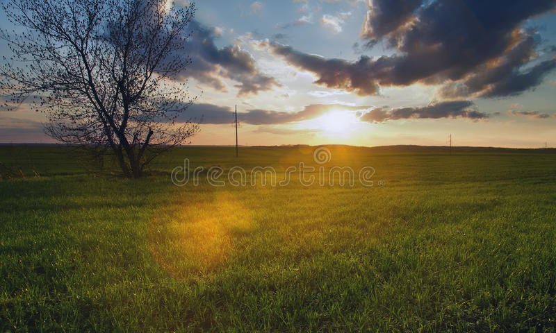 Spot Of Sunlight Royalty Free Stock Photography