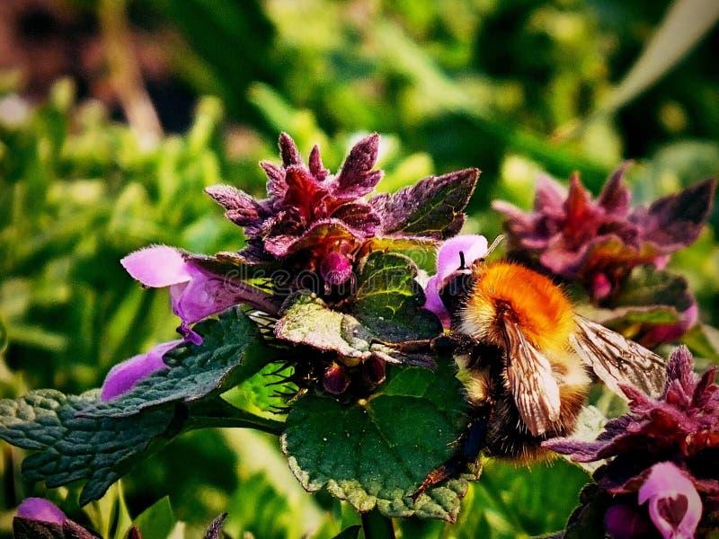 Spotkanie z pszczołą obrazy royalty free
