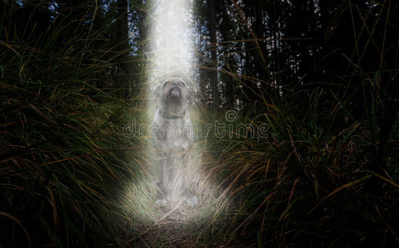 Spotlight from above on a dog. stock images