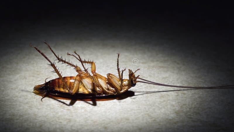Spotlight closeup van een doodsbange kakkerlak stock afbeelding