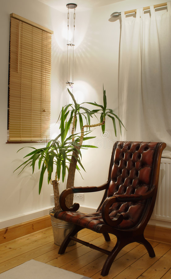 Spotlight corner. Brown leather chair and yukka plant, in the corner by the cable lights