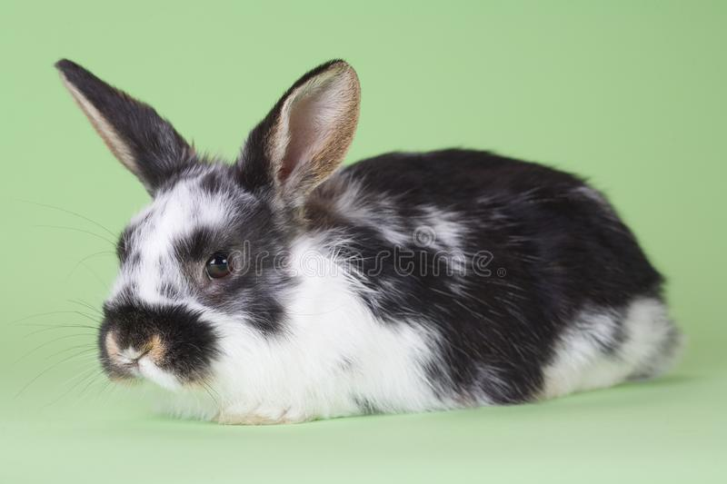 Download Spotted bunny, isolated stock photo. Image of clean, fleecy - 8637744