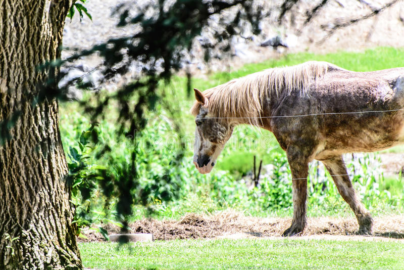 Spotted horse at ranch. A spotted horse at a ranch stock image