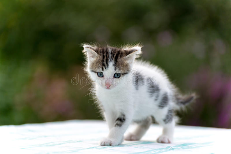 Spotted kitten standing on table in the garden stock photography