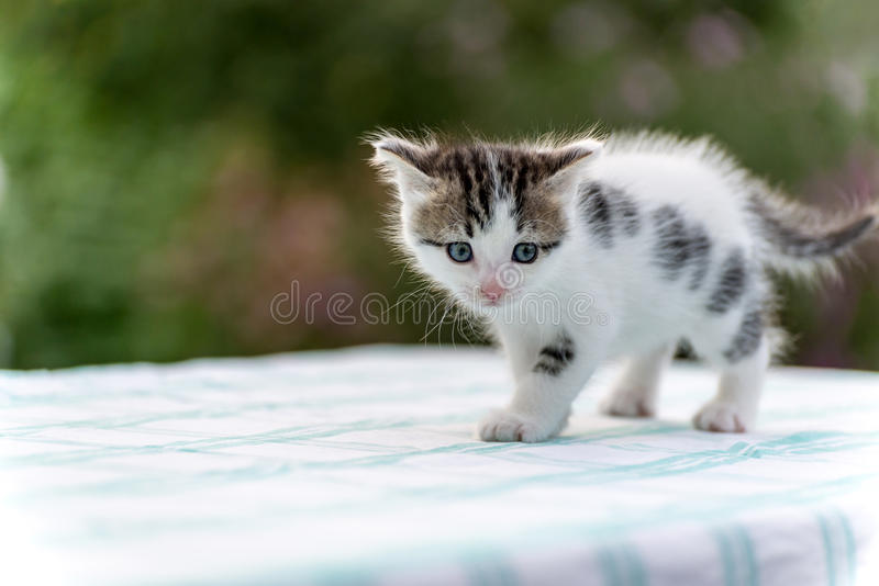 Spotted kitten standing on table in the garden stock image
