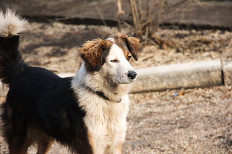 Spotted a sad homeless dog.  stock photo