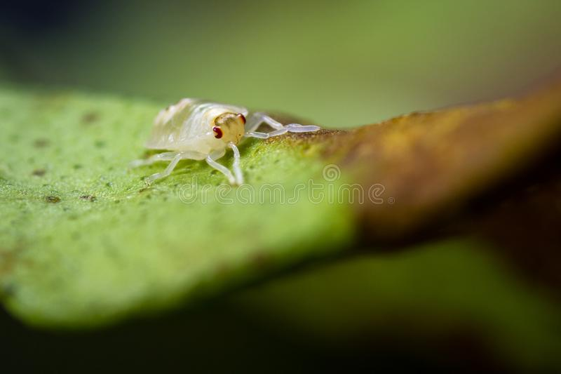 Spotted spider mite. Close up of a small spider mite on a dying leaf royalty free stock photography