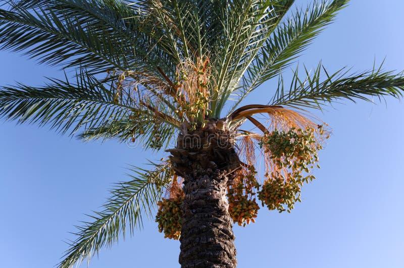 spotyka się z drzewka palmowego fotografia royalty free