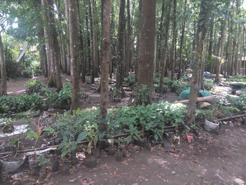 Spowodowany przez człowieka las obraz stock