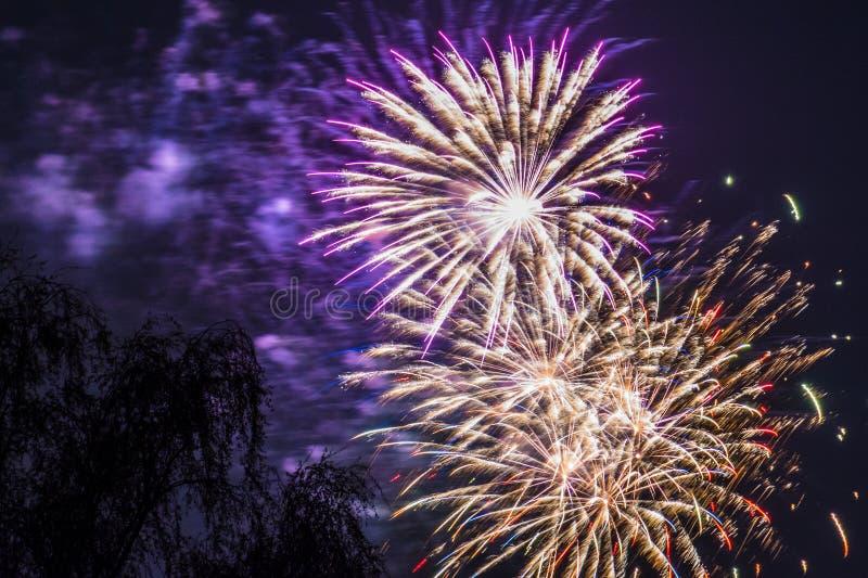 Spränger den guld- röda lilan för fyrverkerifyrverkeriberöm trädet royaltyfri fotografi