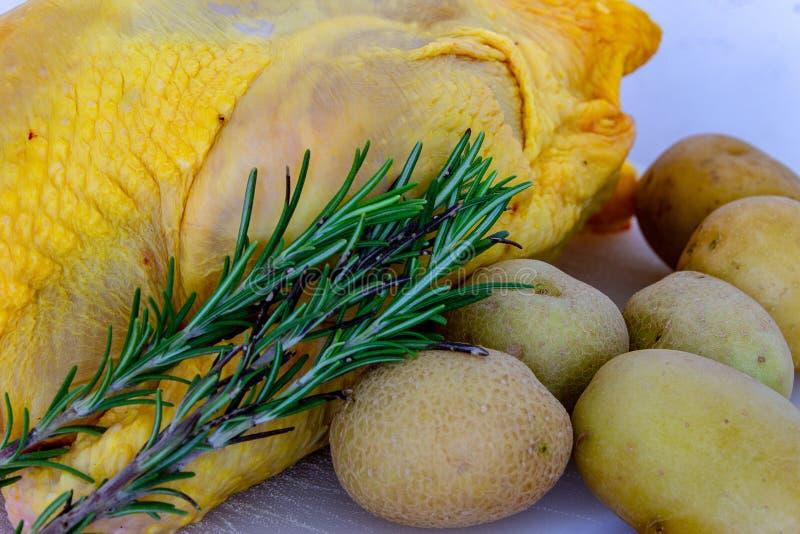 Sprätt- höna med den karakteristiska gula färgen arkivfoto