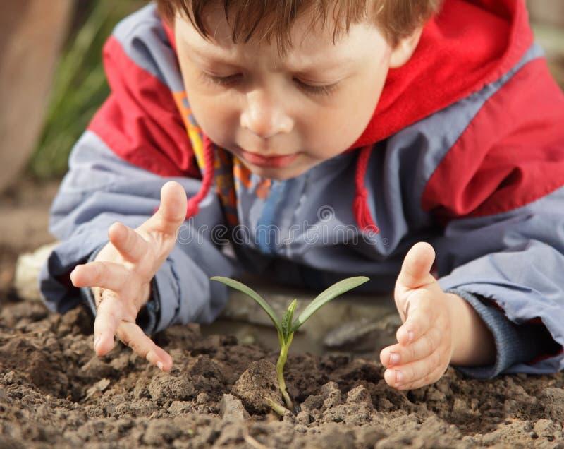 Sprössling in der Kindhand stockbilder