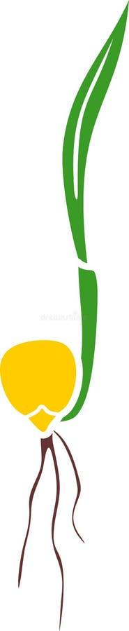 Sprössling der Maismaisanlage mit grünem Blatt, gelbem Samen und Wurzel lizenzfreie abbildung