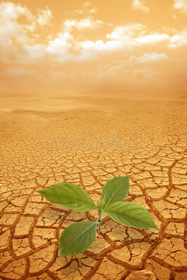 Sprössling Sprig im droughty Boden stockfotos