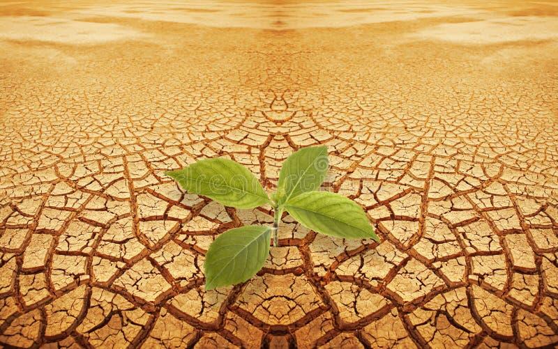 Sprössling Sprig im droughty Boden stockbild