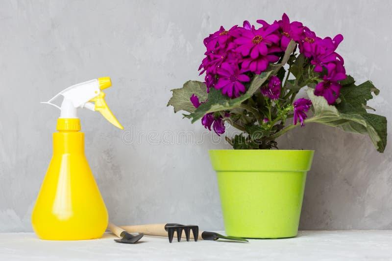 Sprühflasche und blühende Blume gegen Pflanzenkrankheiten und Plagen Benutzen Sie Handspr?her mit Sch?dlingsbek?mpfungsmitteln im lizenzfreies stockbild