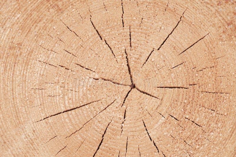 Sprünge vom Kern zu den Rändern der Lügenstirnfläche des Baumstammes zu uns stockfotos