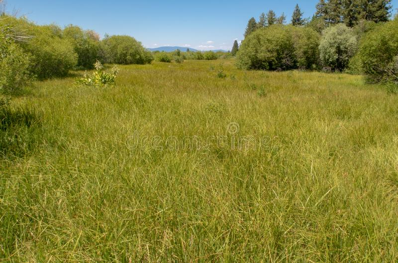 A sprawling meadow near Lake Tahoe royalty free stock photo