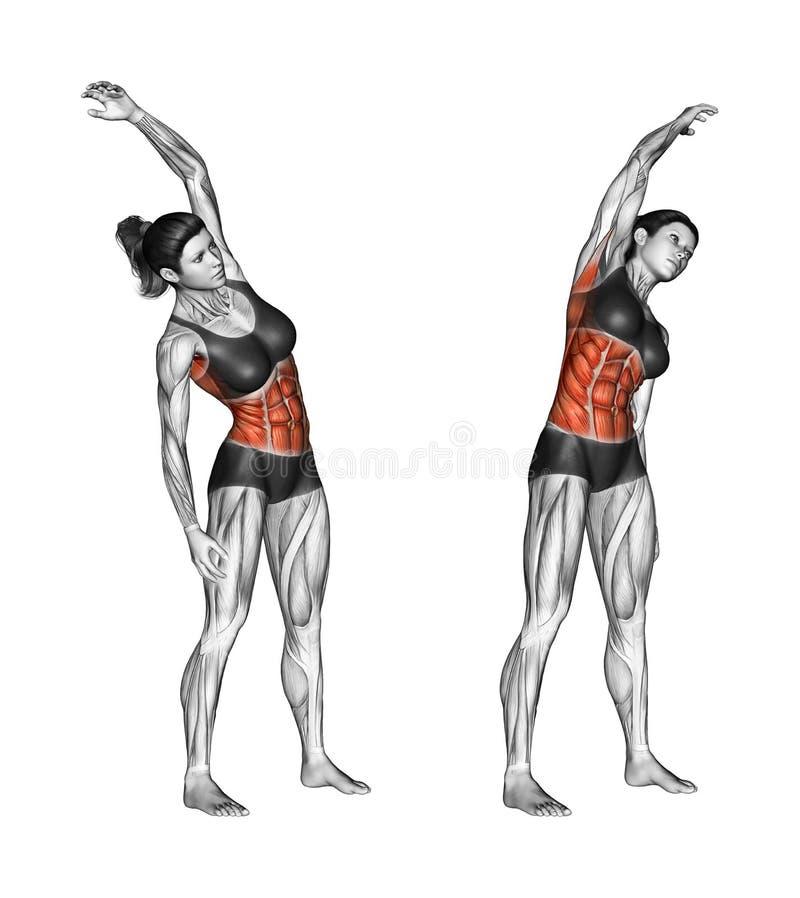 Sprawności fizycznej ćwiczyć Skłony w kierunku femaleness ilustracja wektor