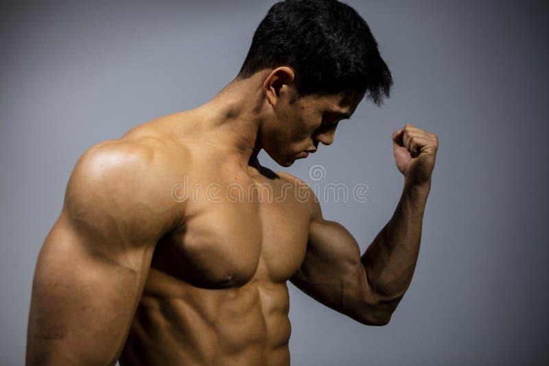 Sprawności fizycznej Bicep Wzorcowy Napina mięsień zdjęcia stock