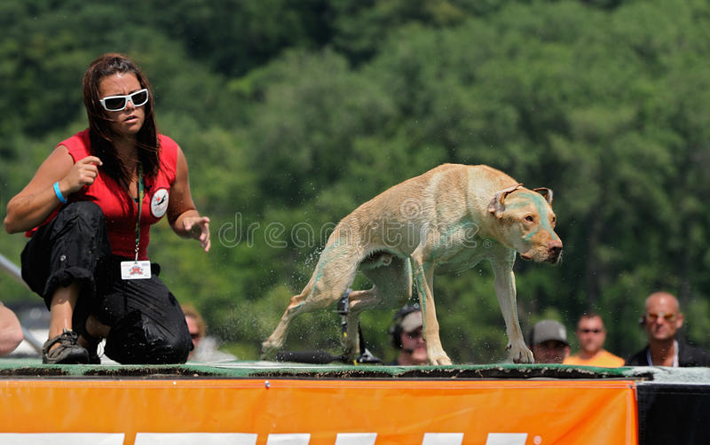 Download Spray editorial stock photo. Image of compete, canine - 10446583