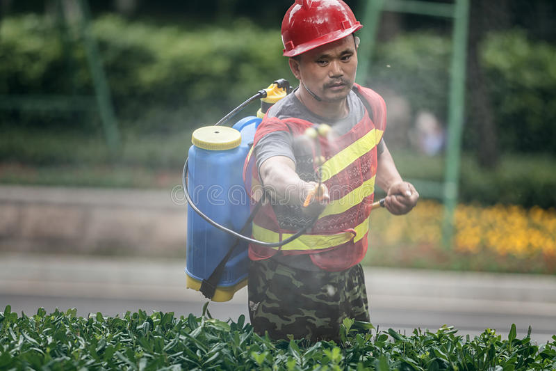 Spray insecticide workers royalty free stock image