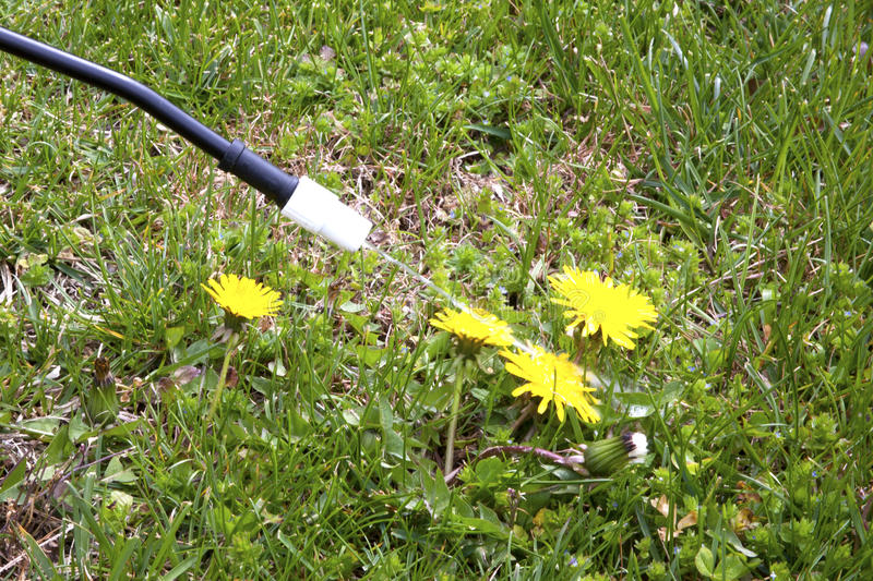 Download Spraying Dandelions stock photo. Image of green, concept - 24330506