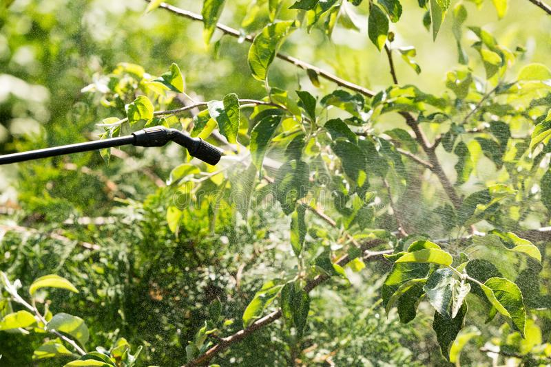 Spraying of fruit tree from pests stock images